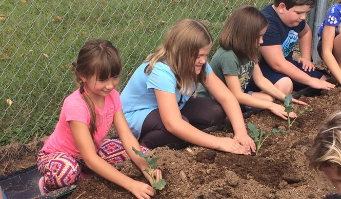 3rd grade students plant broccoli in raised beds at AES.