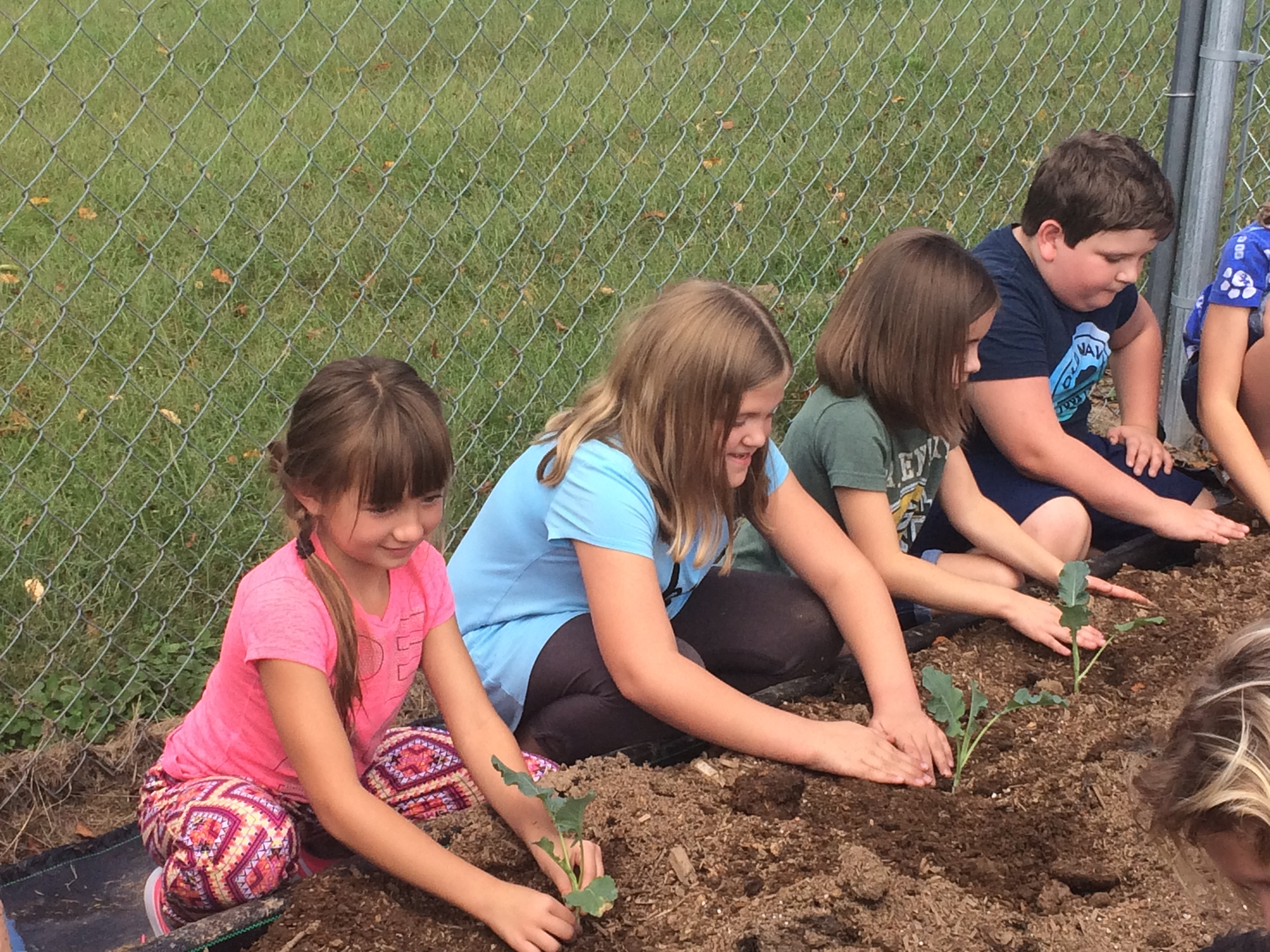 Third grade students will have the opportunity to watch broccoli that they planted grow in raised beds at AES, and then harvest the crops in late November.